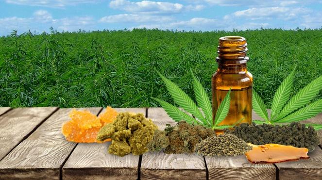 Cannabis-Blog-Full.jpg