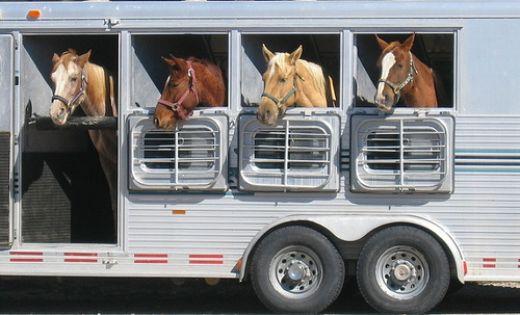 horse-trailer-1.jpg