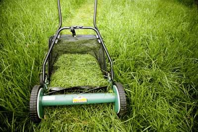 mulch-vs-bag-grass-1.jpg