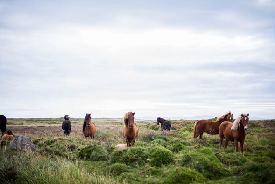 horse transportation equo
