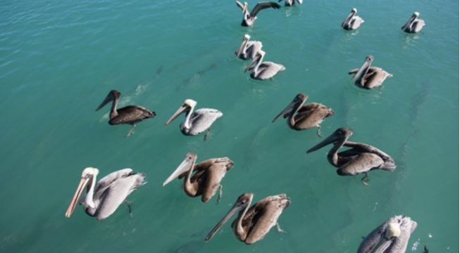 Local Florida Groups Form the Only Statewide Rights of Nature Initiative in the U.S.