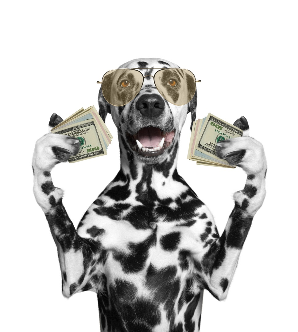 dalmatian-holding-stacks-of-cash-money