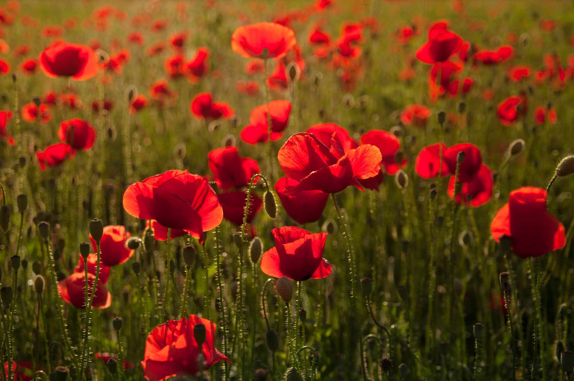 remembrance day lest we forget u2013 everything retirement