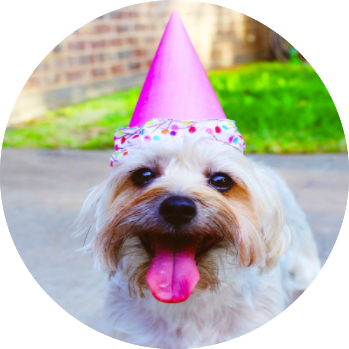 Best practice for ecommerce bithday emails_Birthday dog image