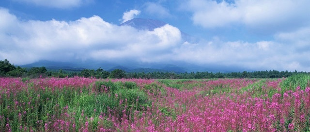 fullsizeoutput_22be.jpeg