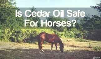 is cedar oil safe for horses