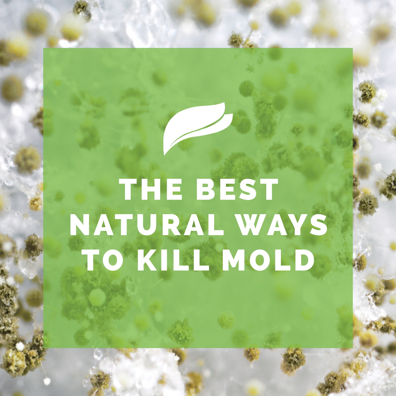 The Best Natural Ways To Kill Mold