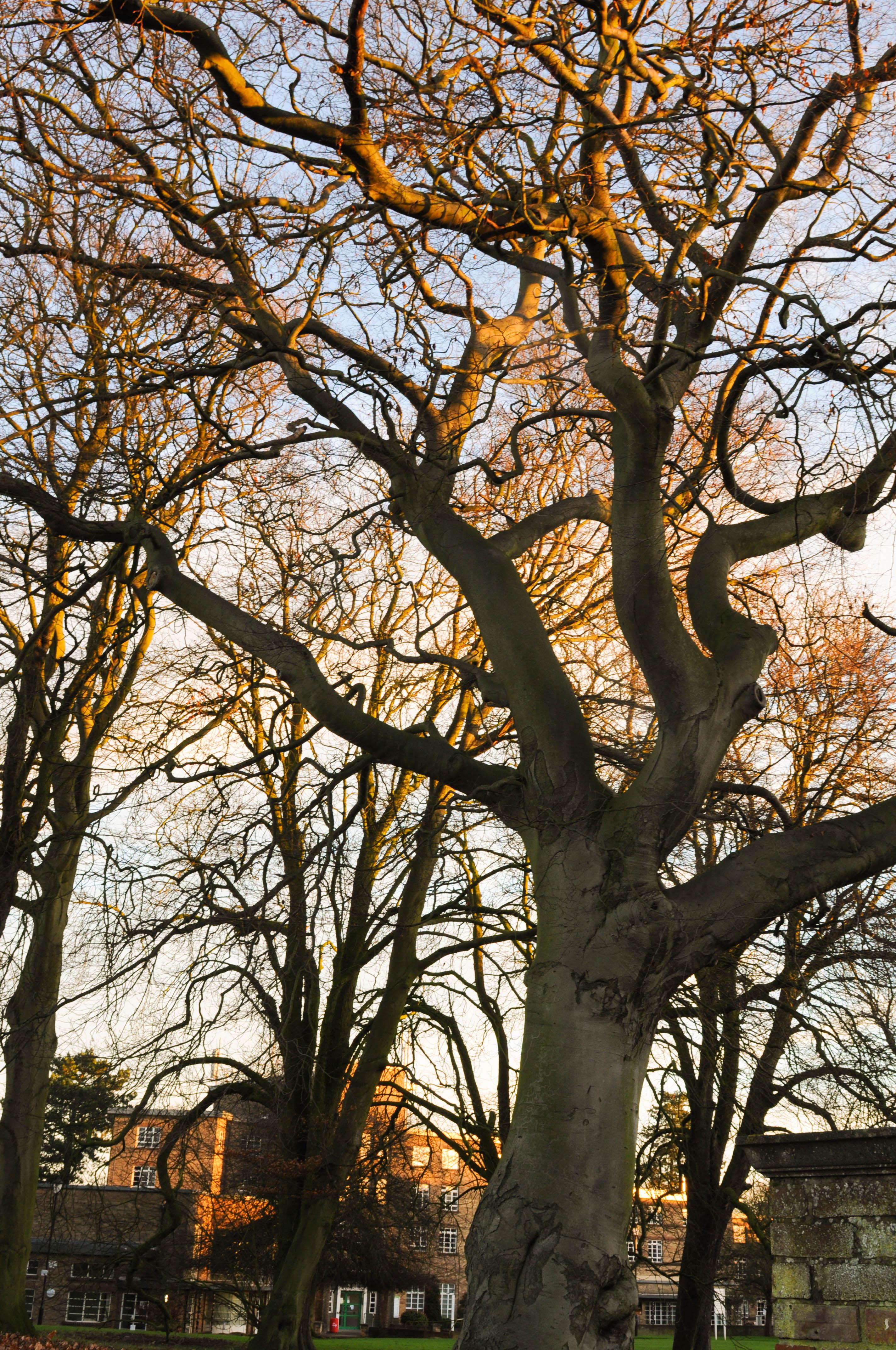 Tree--3.jpg