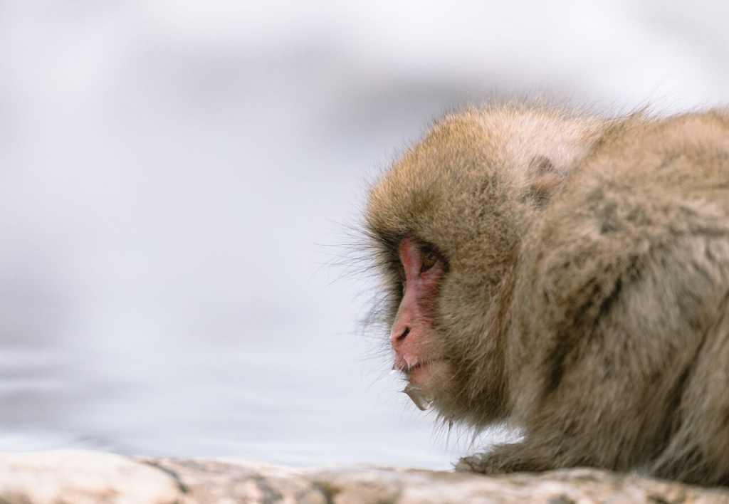 one-monkey-looking-1024x708