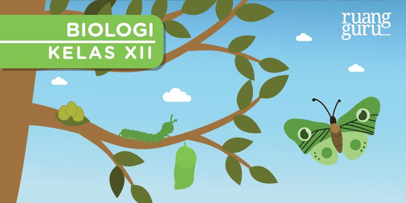 Biologi Kelas 12 Pertumbuhan Dan Perkembangan Pada Hewan