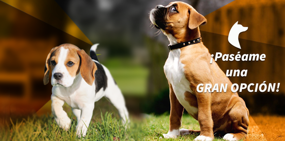 Paséame, la aplicación que brinda servicios de cuidado para perros