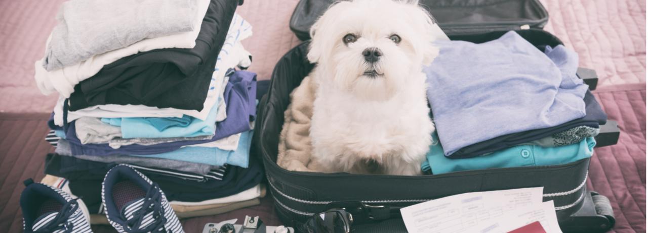 Ventajas y desventajas de llevar a tu mascota de vacaciones