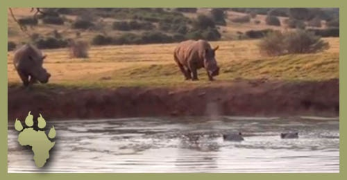 SP_Rhino_standoff