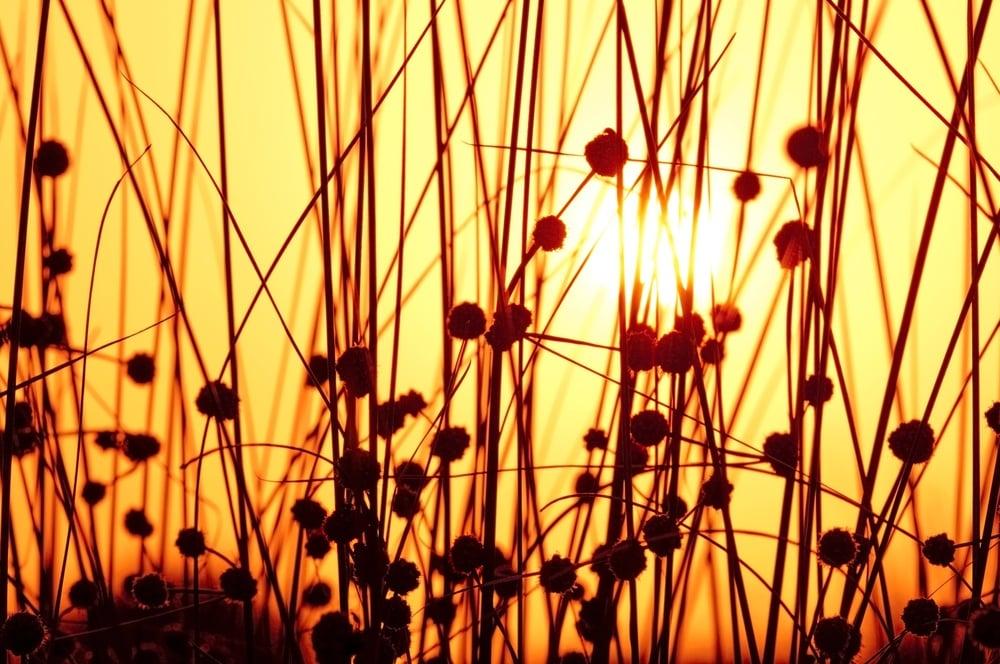 summer solstice garden