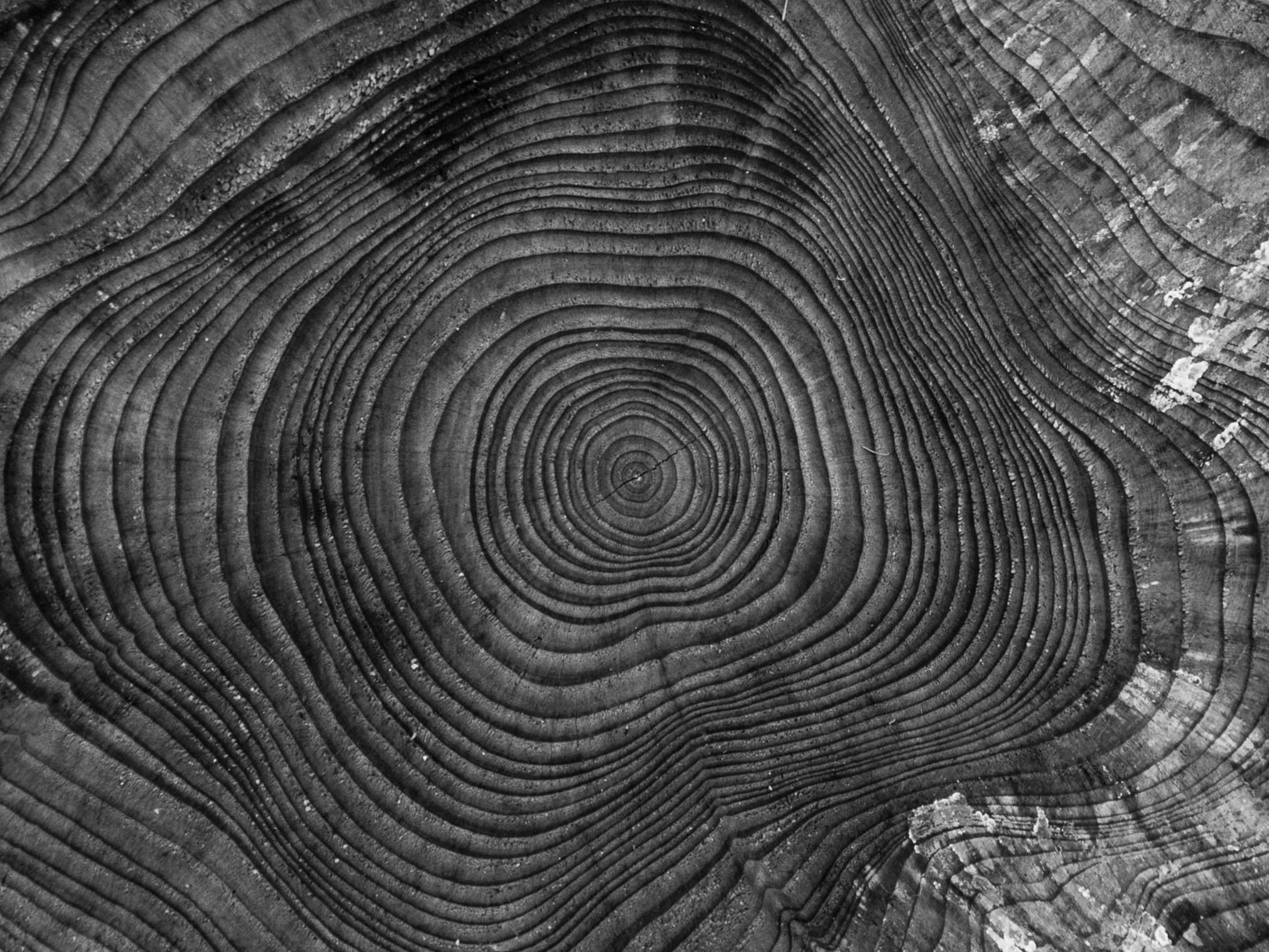 tree-nature-abstract-black-and-white-wood-photography-844367-pxhere.com.jpg