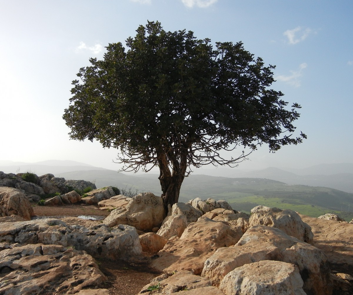 tree_lonely_rocks_stones_rocky_grounds_landscapes_israel-1347541.jpg