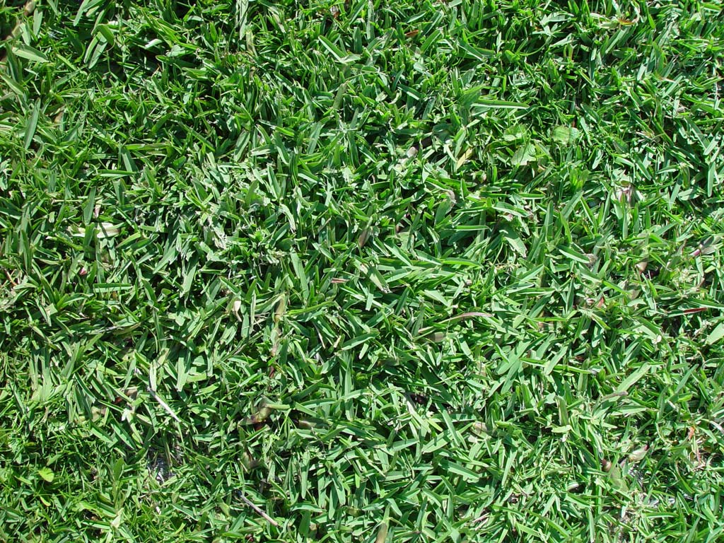 Dry Times Tips For Keeping Your Lawn Alive In An Age Of Water Rationing