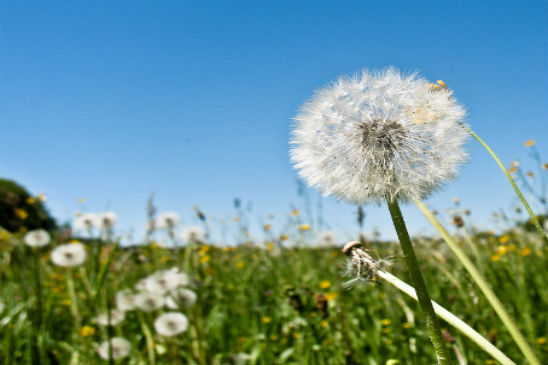 Allergies, Bacteria, Cleanliness: The ABCs to Beating Seasonal Allergies
