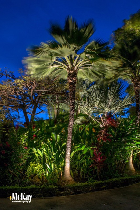 Project spotlight tropical outdoor lighting in maui palm tree landscape lighting maui workwithnaturefo