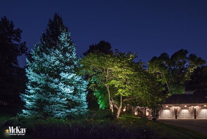 landscape lighting trees