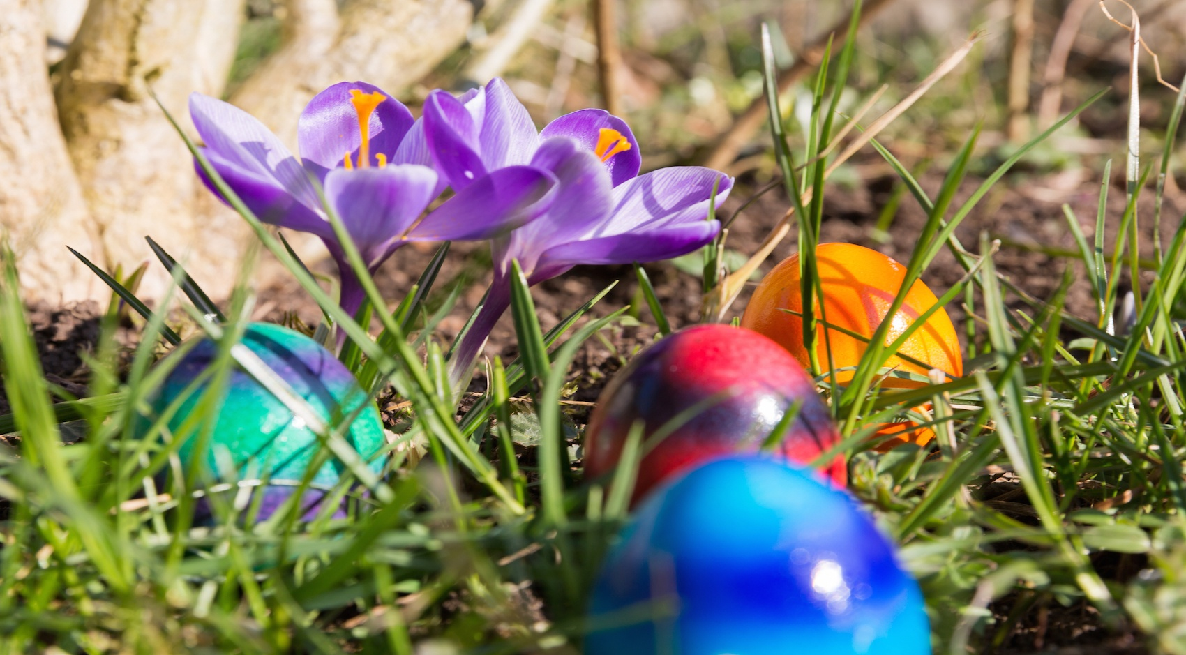 The Top 4 Things to Do in Charleston on Easter Sunday