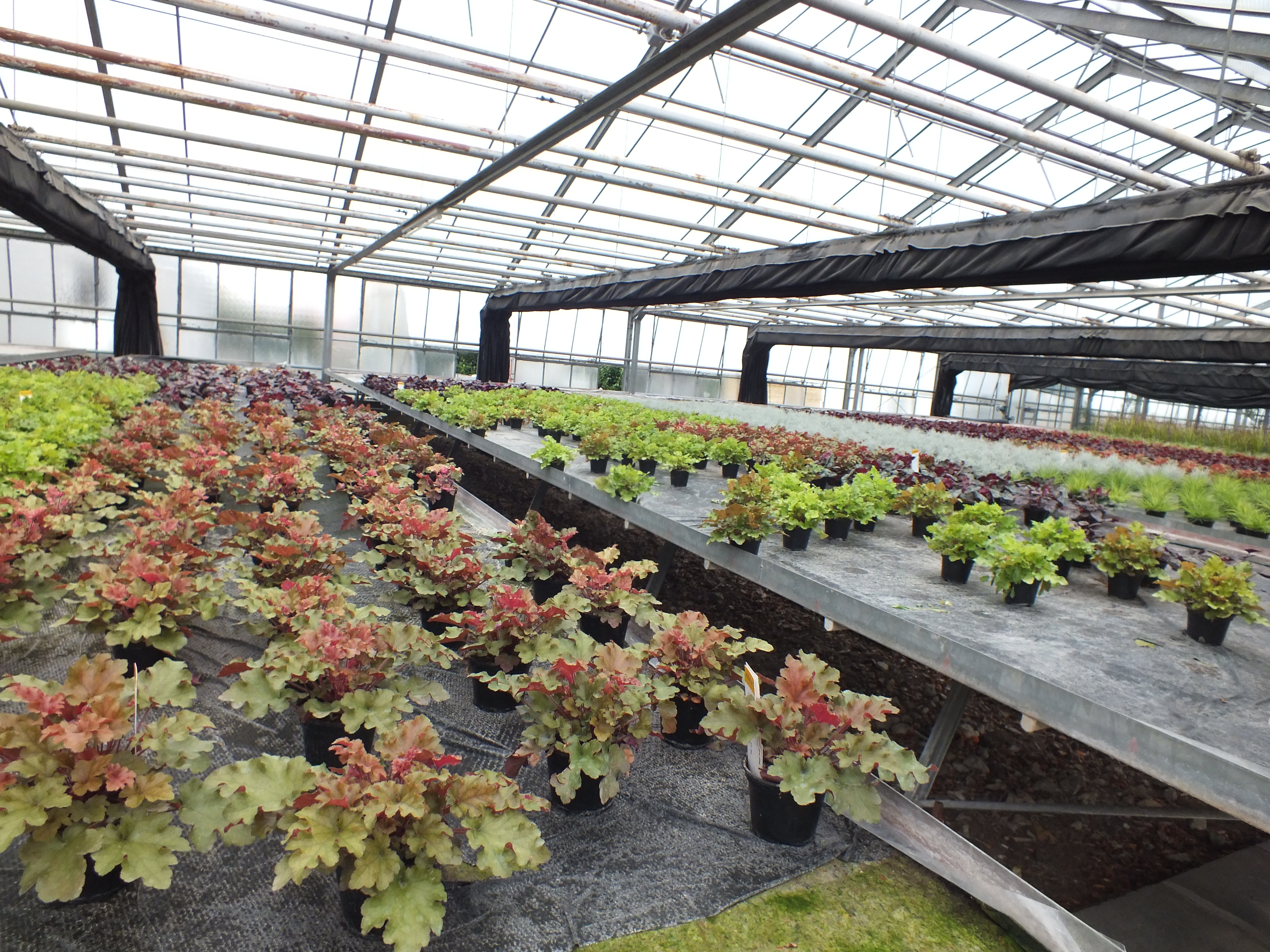 Plants_in_SolaWrap_Greenhouses_where_OK._No_damage_to_Crop_04.jpg