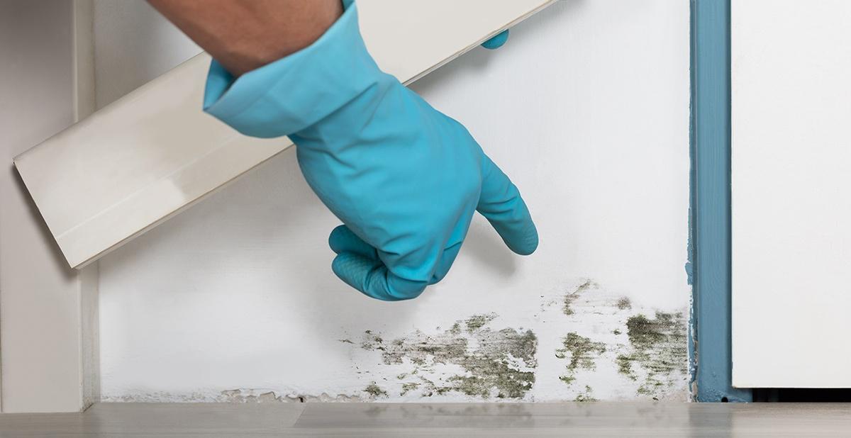 Focus su antimuffa pareti: eliminare e prevenire