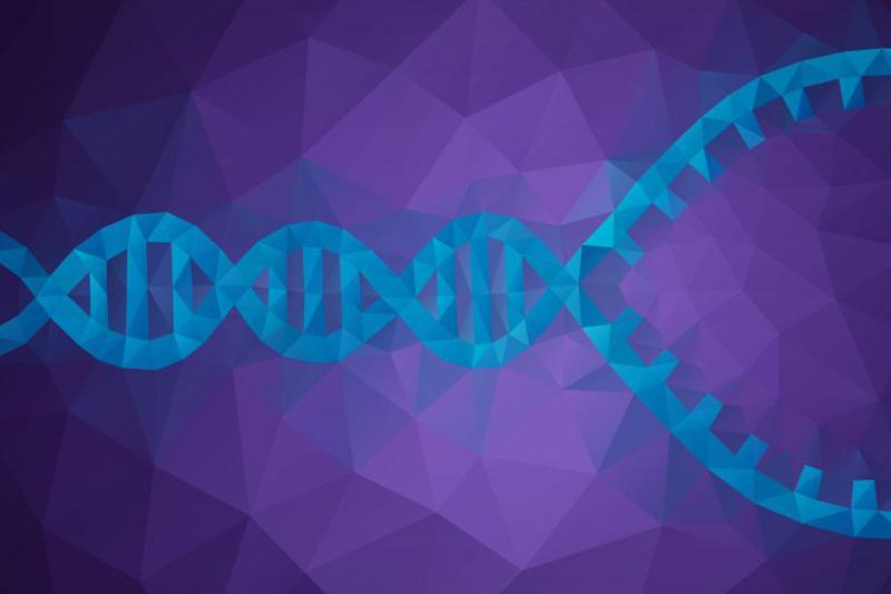 DNA unwinding before replication
