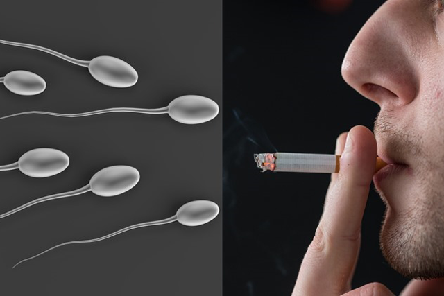 Pre-conception smoking by the father affects son's fertility