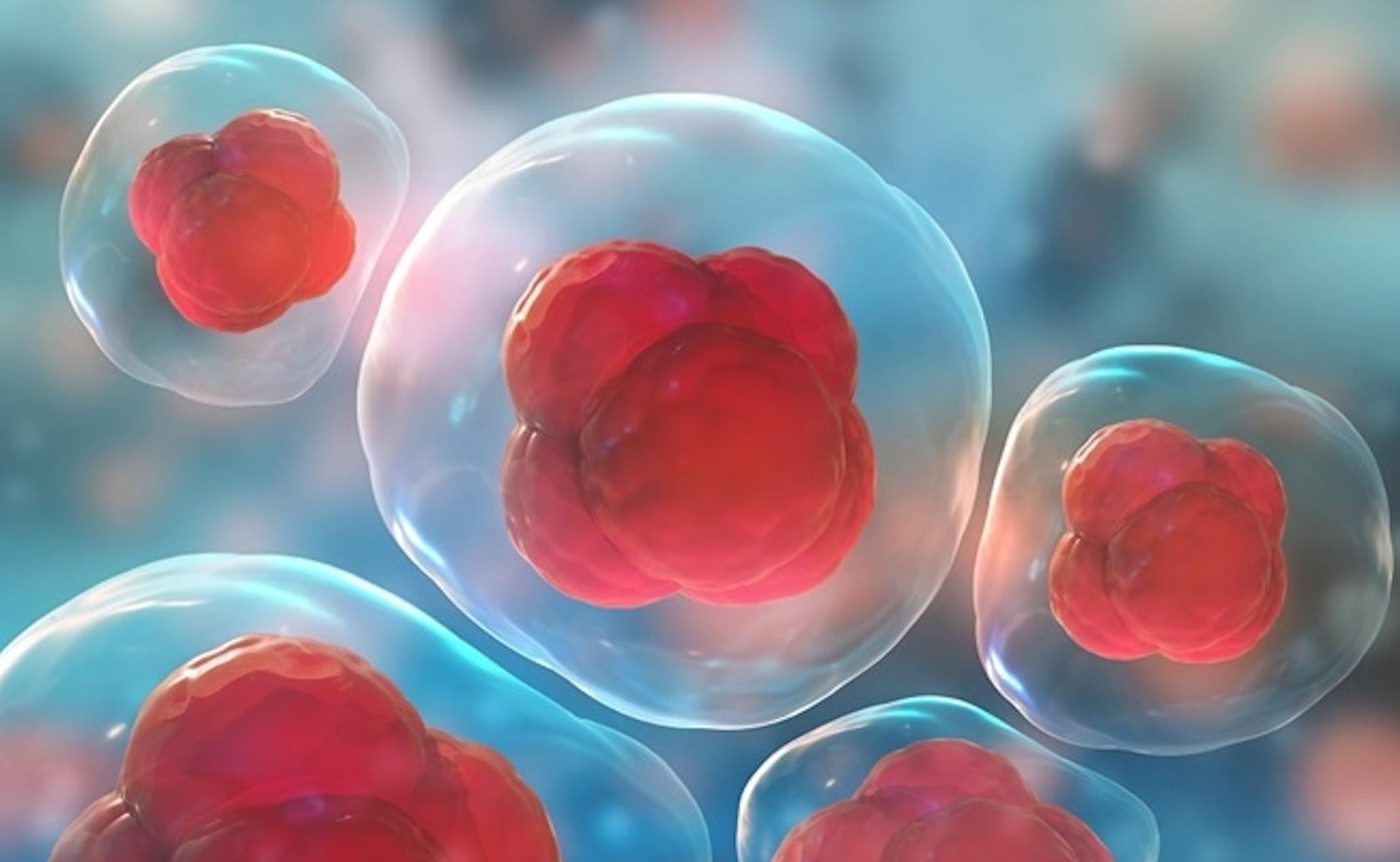 Heat shock proteins in ALS and Dementia