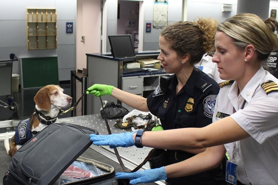 Dog sniffing out luggage at an airport