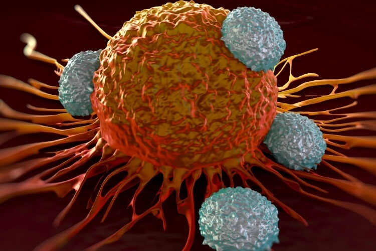 T cells are the soldiers of the immune system
