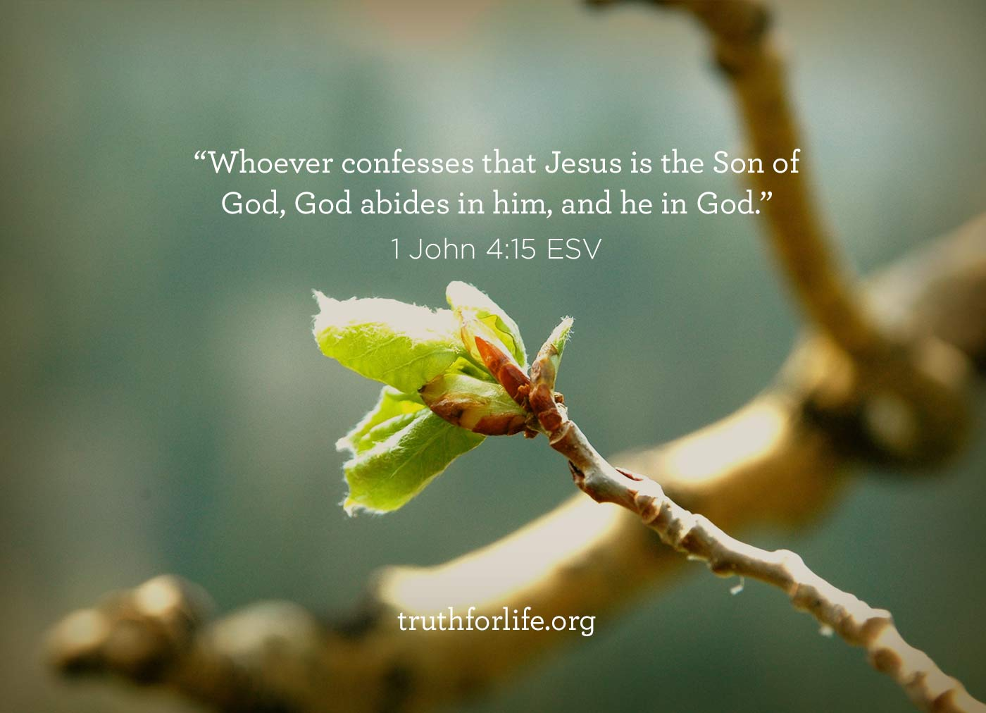 thumbnail image for Whoever confesses that Jesus is the Christ...