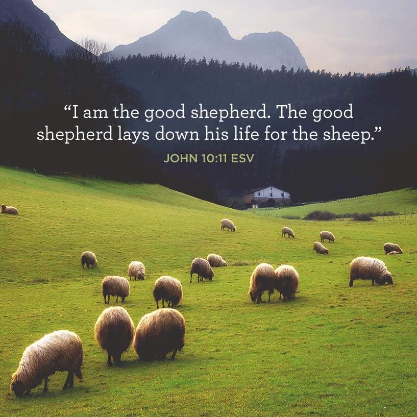 Sermon Feed My Sheep: I Am The Good Shepherd