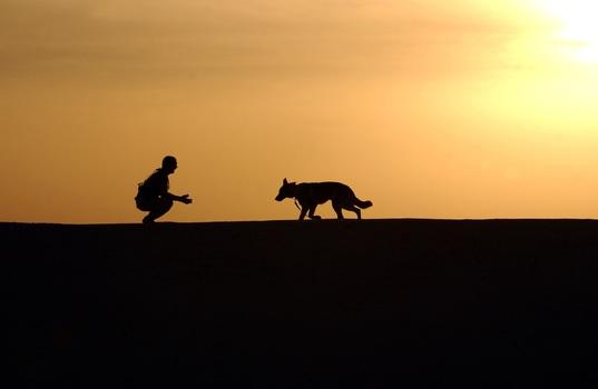 dog-trainer-silhouettes-sunset-38284-medium.jpeg