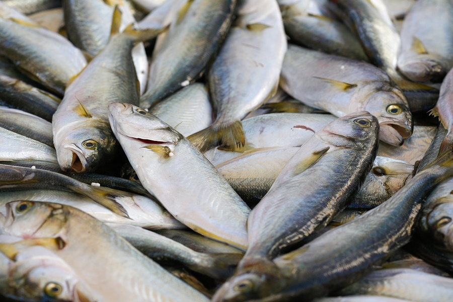 Something Fishy about this Toxin- Parkinson's Risk