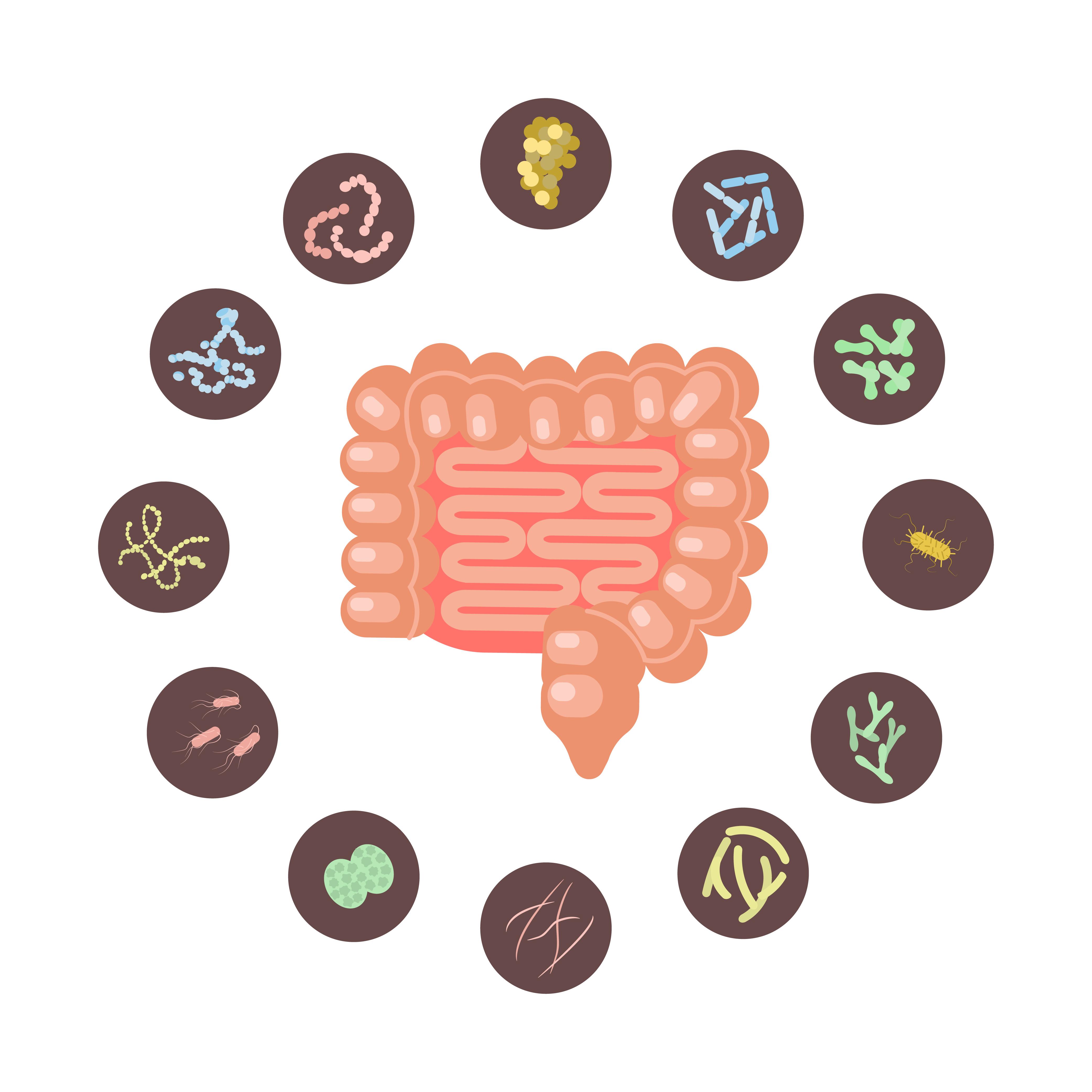 The Megasporebiotic Leaky Gut Study