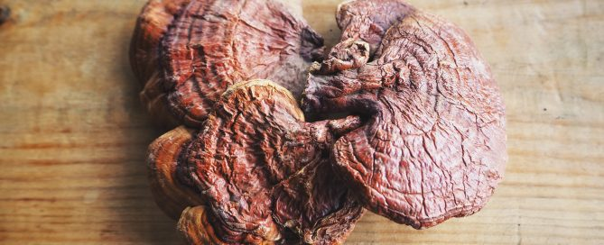 Awaken Your Immune System with Reishi - The Top-Selling Mushroom Species in the World