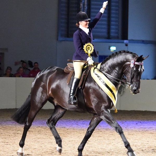 Prestigious new equestrian show by East of England Arena.