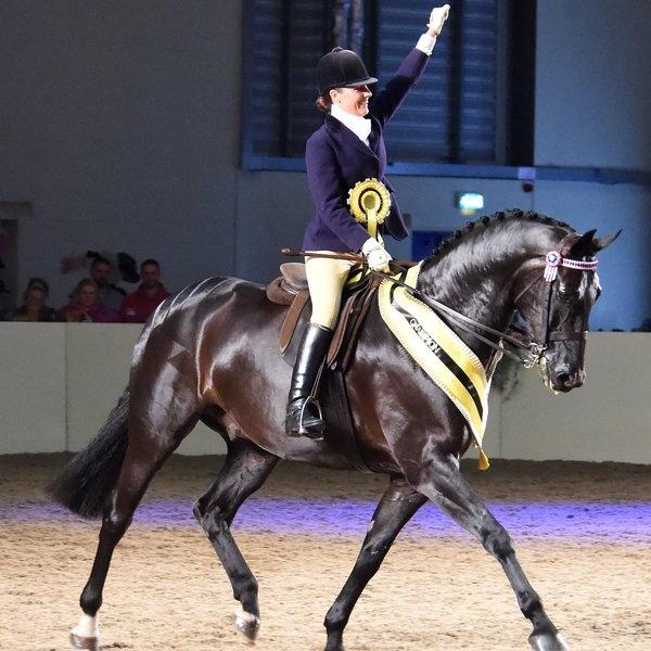 Prestigious new equestrian show by East of England Arena.