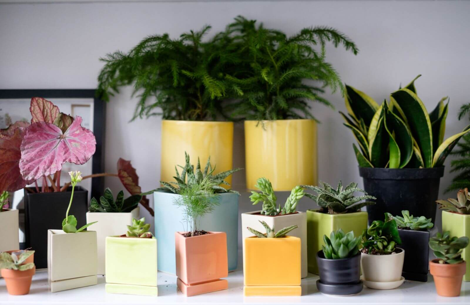 The-Sill-office-design-ceramics-and-plants
