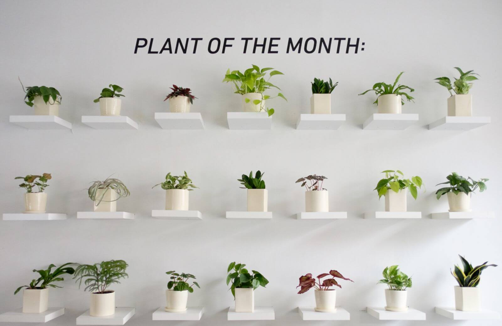 The-Sill-office-design-plant-of-the-month