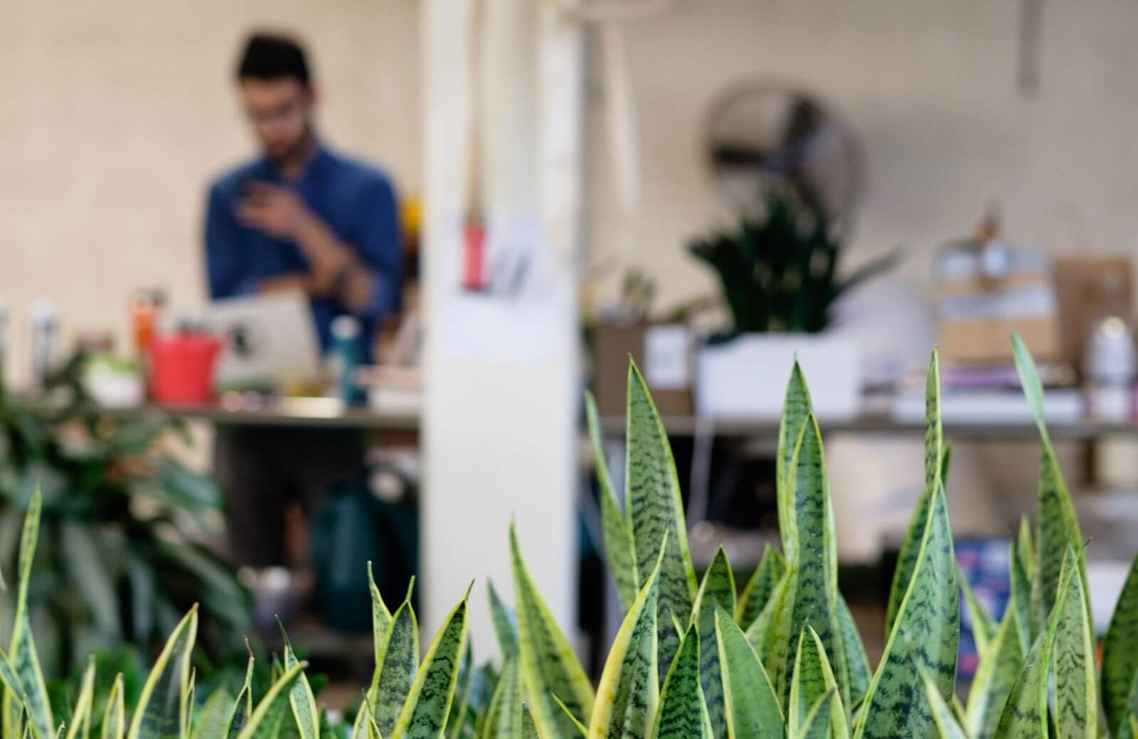 The-Sill-plants-for-your-office