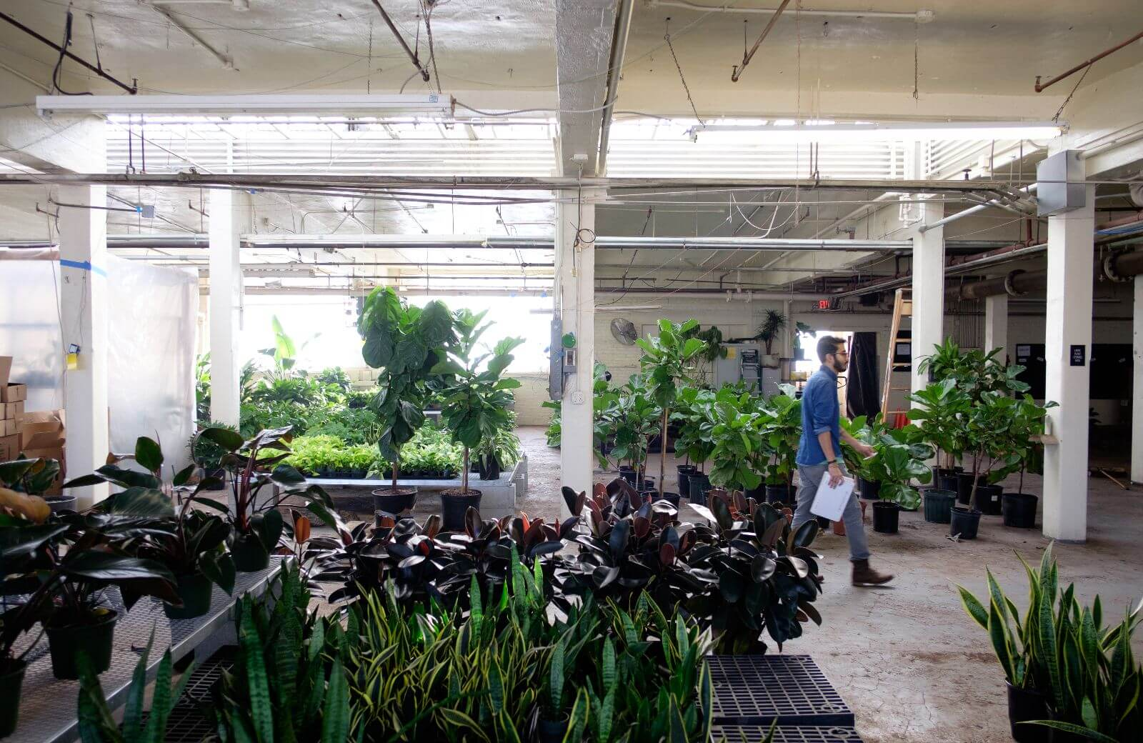 global-workplace-practices-office-plants