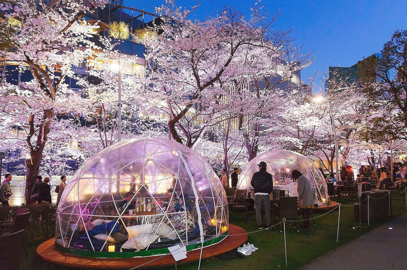 chandon blossom lounge