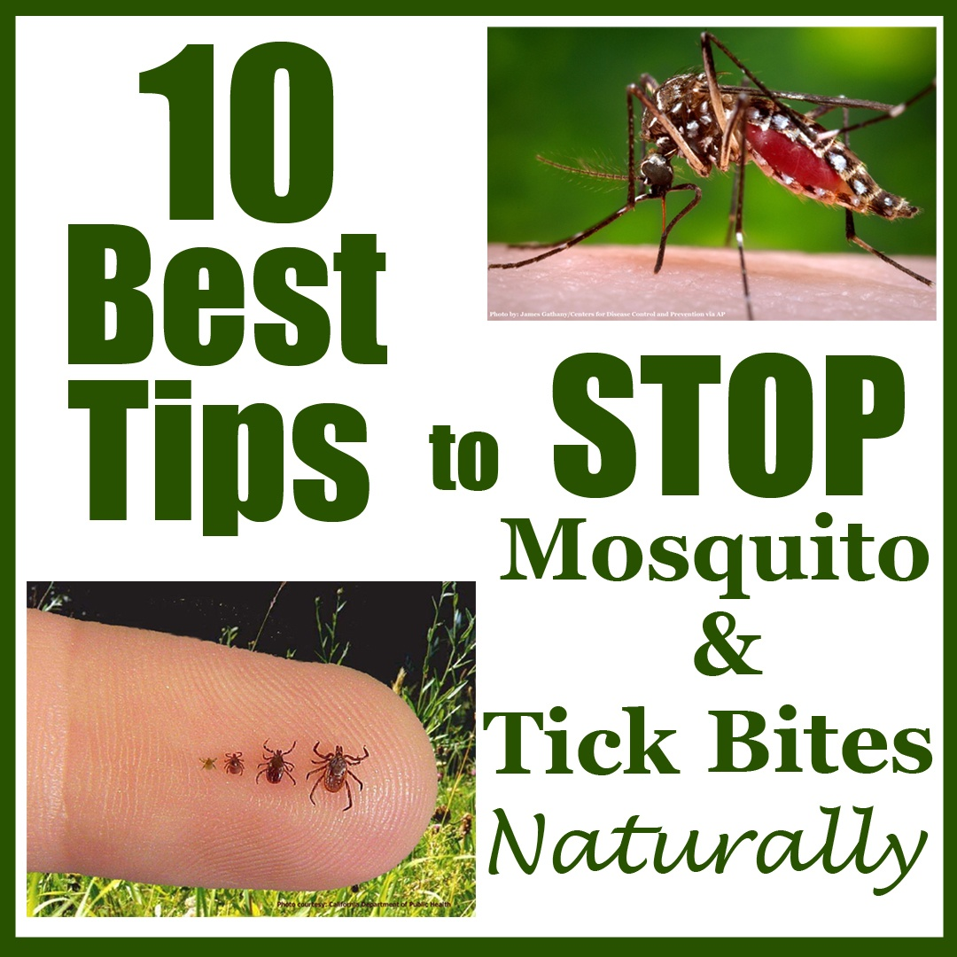 10-Best-Tips-to-Stop-Mosquito-and-Tick-Bites-Naturally