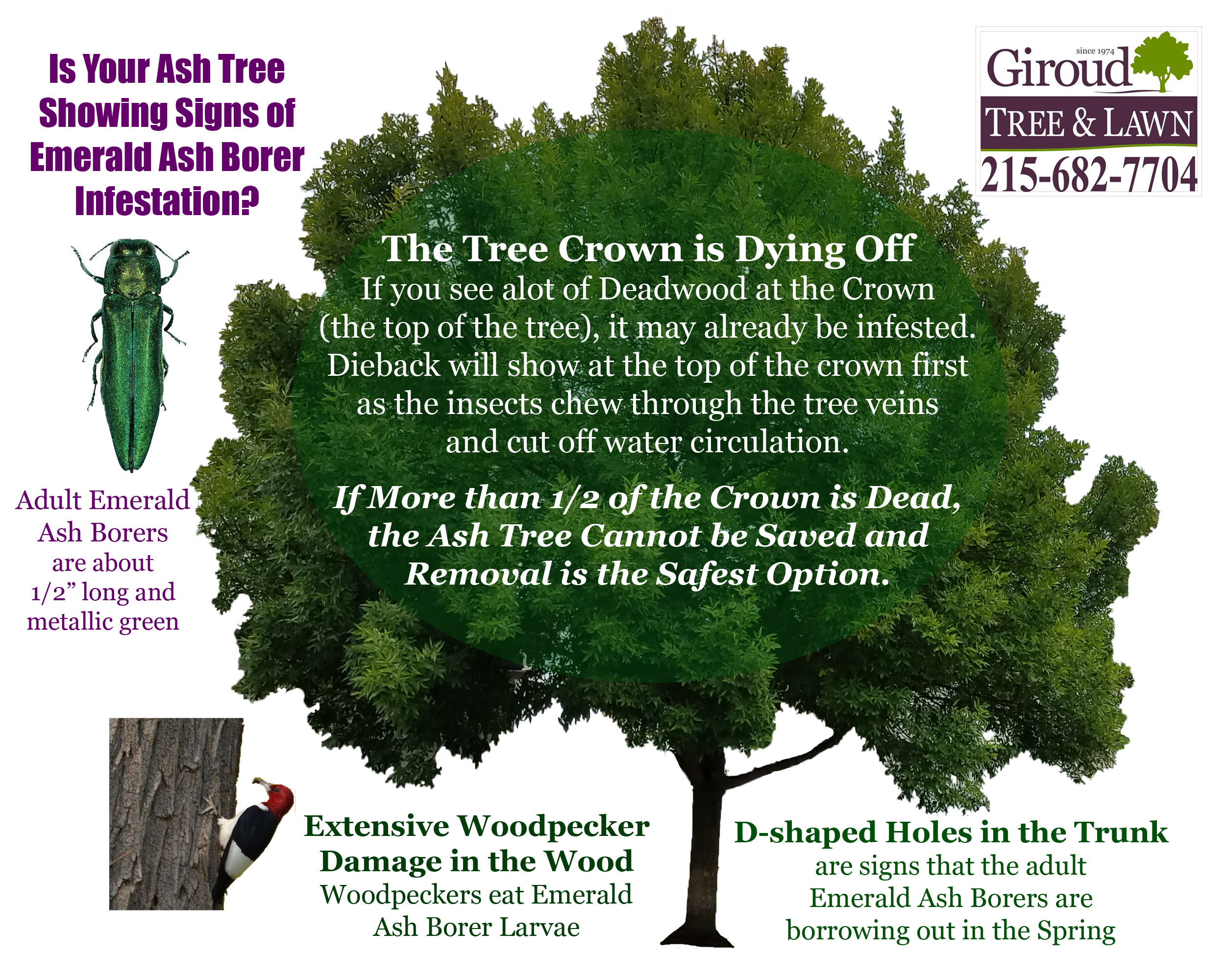 2018-Success-in-the-fight-against-emerald-ash-borer-Are-Your-Trees-Infected-1