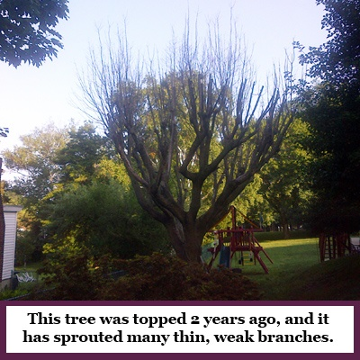 2018-Bad-Pruning-Kills-Trees-topping