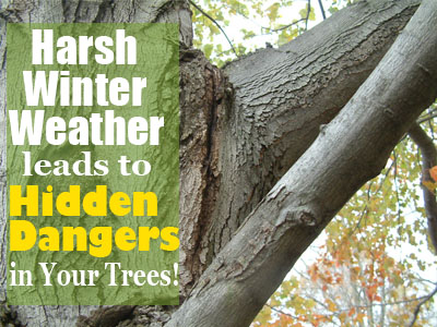 Harsh Winter Weather Leads to Hidden Dangers in Your Trees