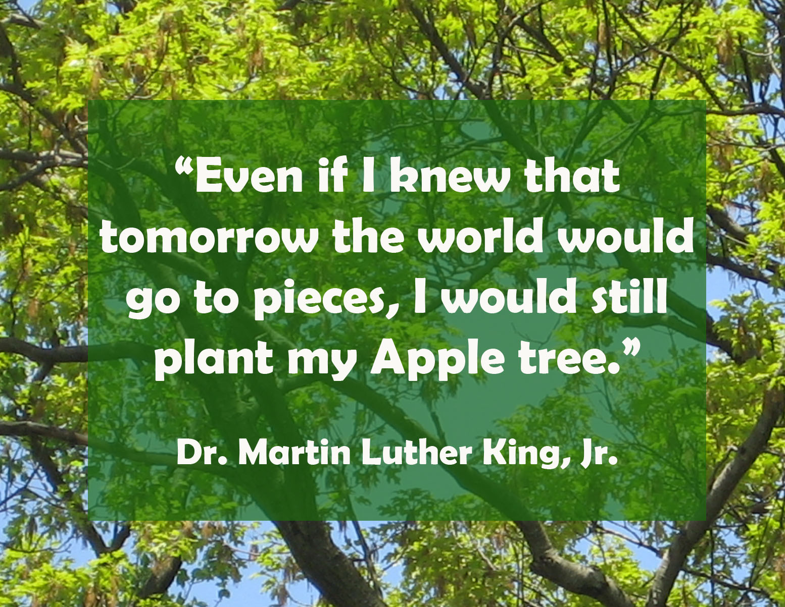 Dr. Martin Luther King Jr Apple Tree.jpg